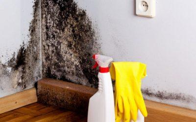 Les dangers de la moisissure dans la maison